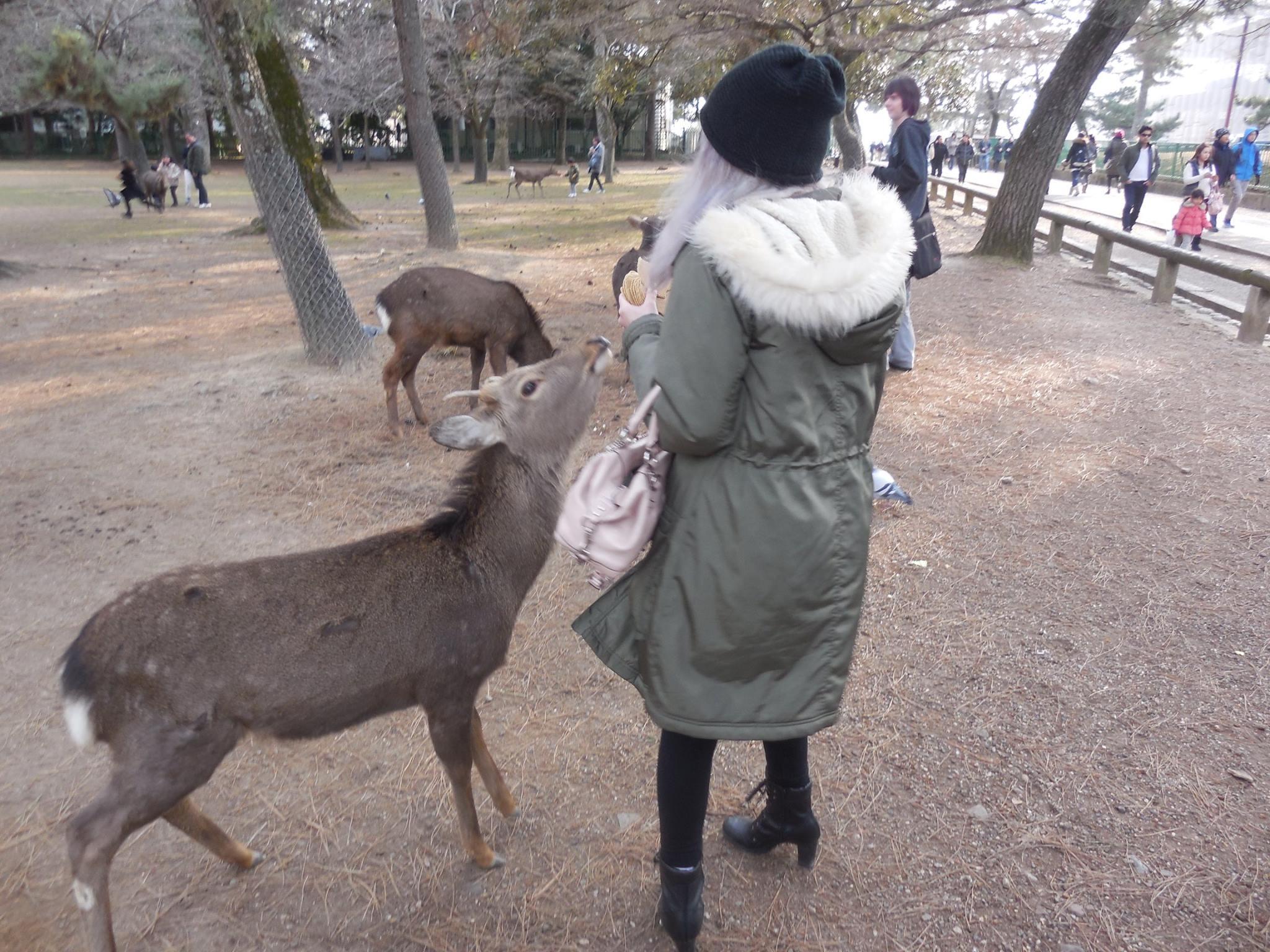 Nara was awesome